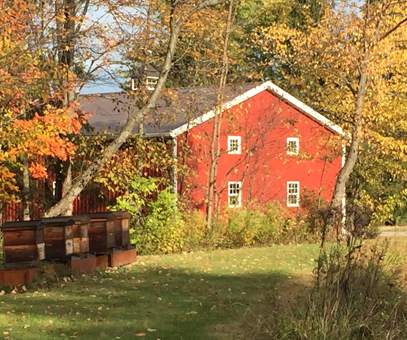 Best Places In Our Country: A Blog From Meadowlake Farm